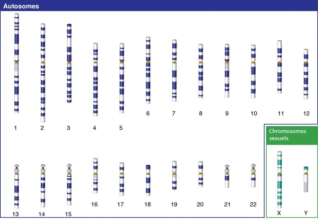Y Chromosome Test Paternity Testing Labs